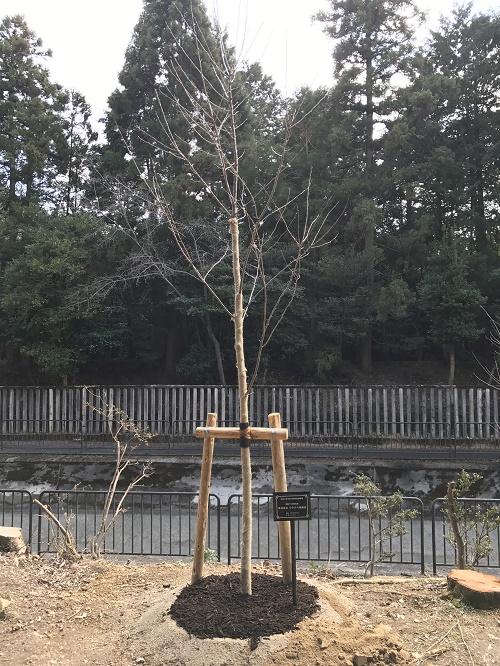 記念植樹20170316_1_500.jpg